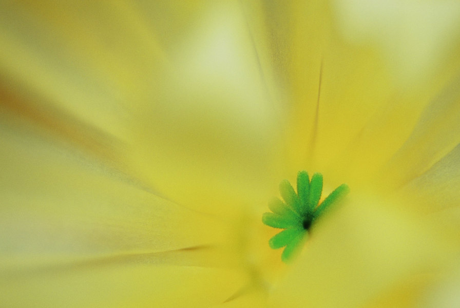 fotografie - Životní energie I
