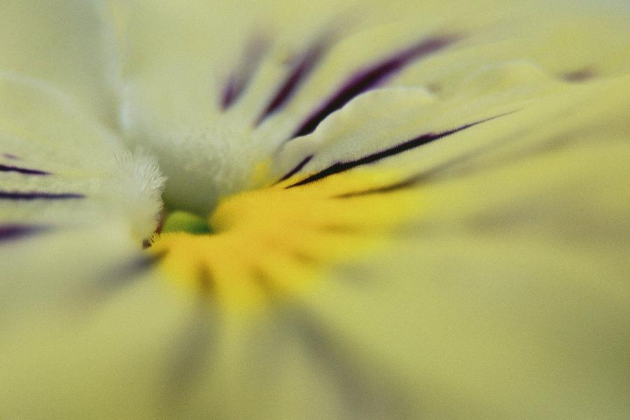fotografie - Žlutá fantazie