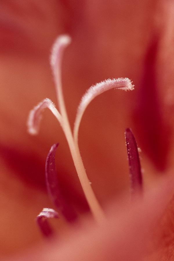 fotografie - Vášnivá inspirace I