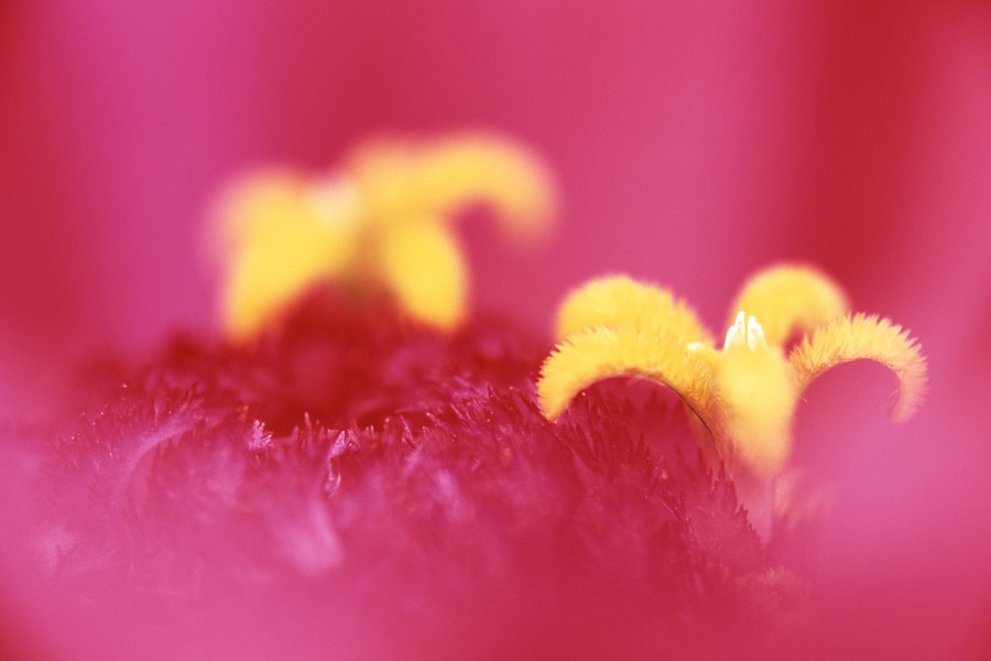 fotografie - Tanec v růžovém III