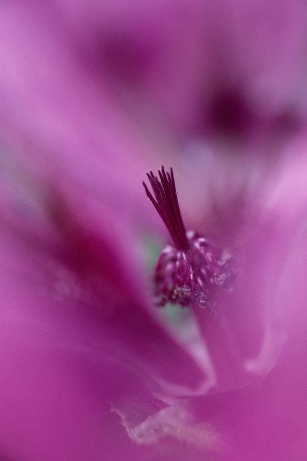 fotografie - Vnitřní krása II