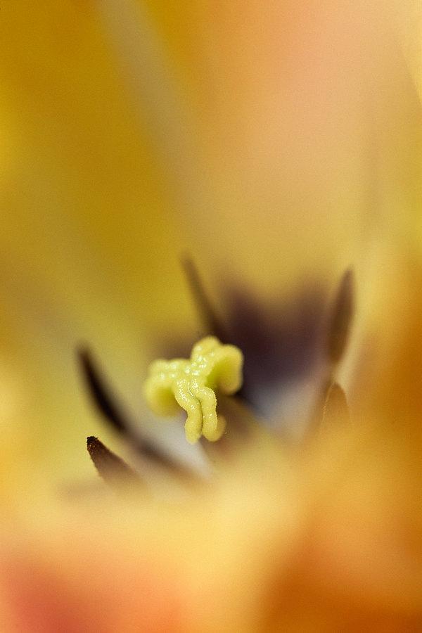 fotografie - Odpuštění