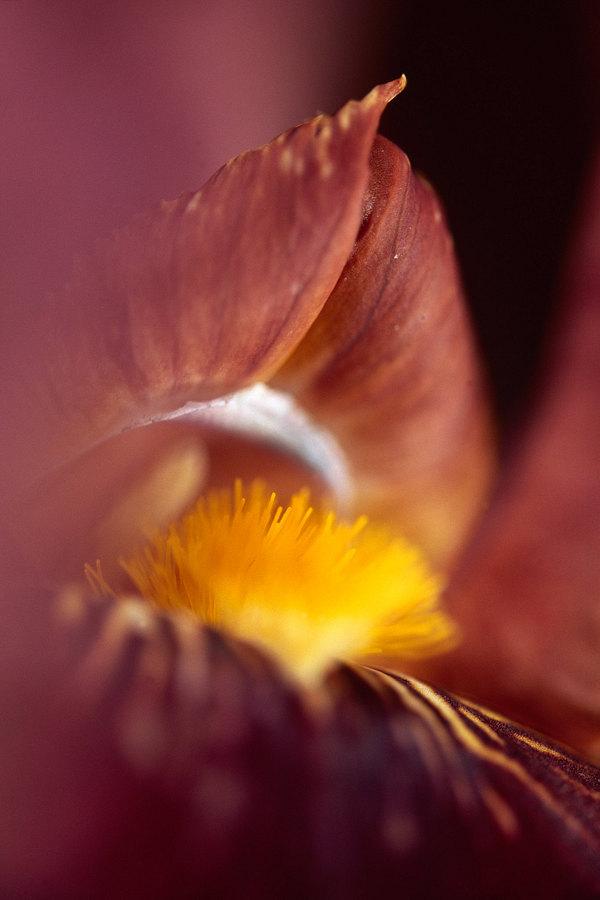 fotografie - Medové políbení