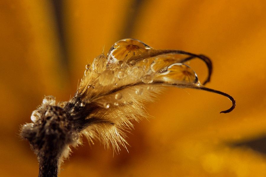 fotografie - Zahradní šperky IV