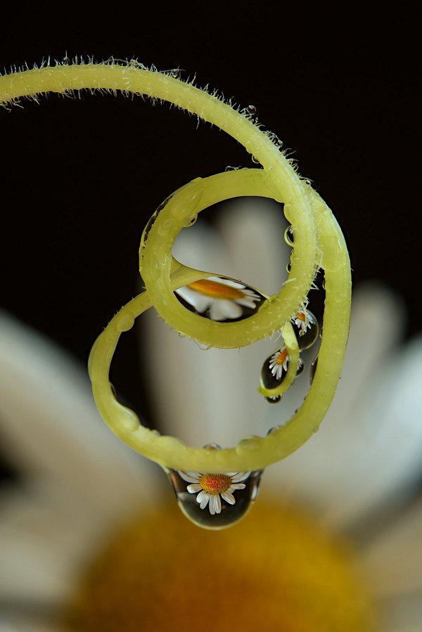 fotografie - Decentní šperk II