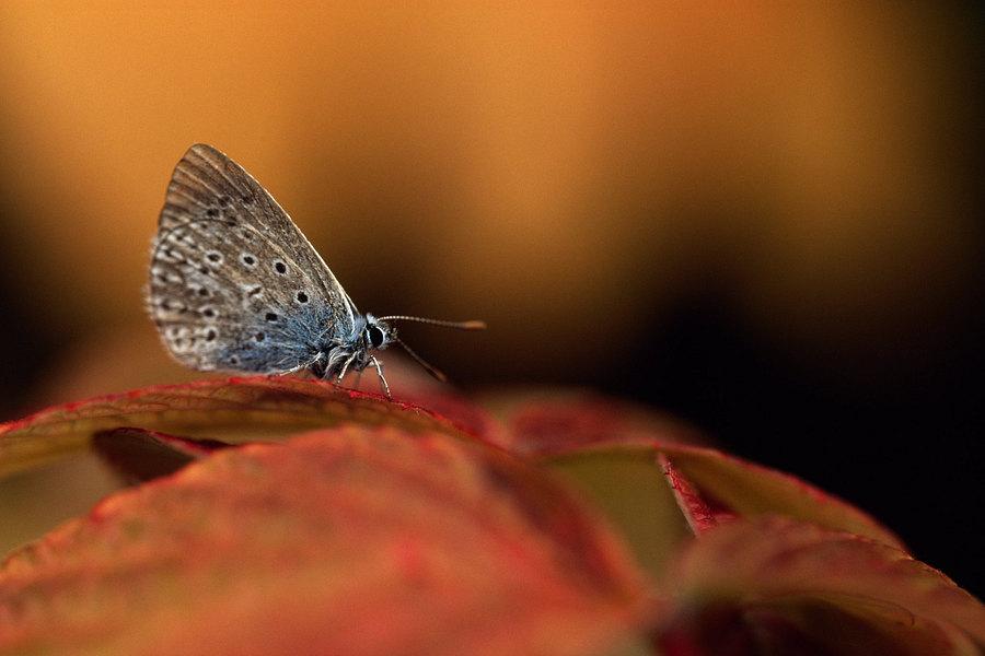 fotografie - Na křídlech podzimu I