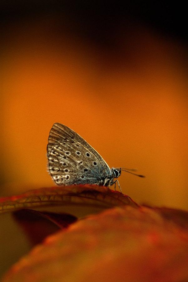 fotografie - Na křídlech podzimu II