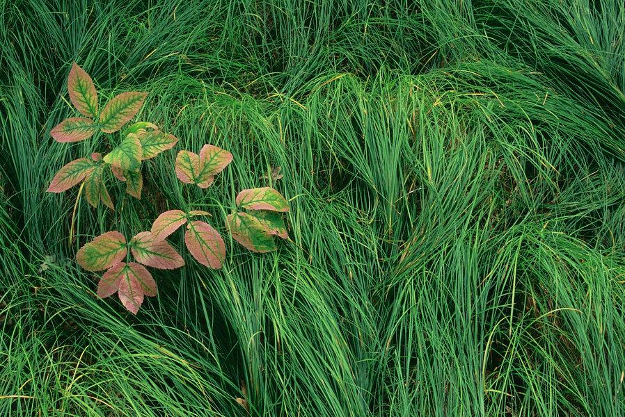 fotografie - Dekorace v trávě I