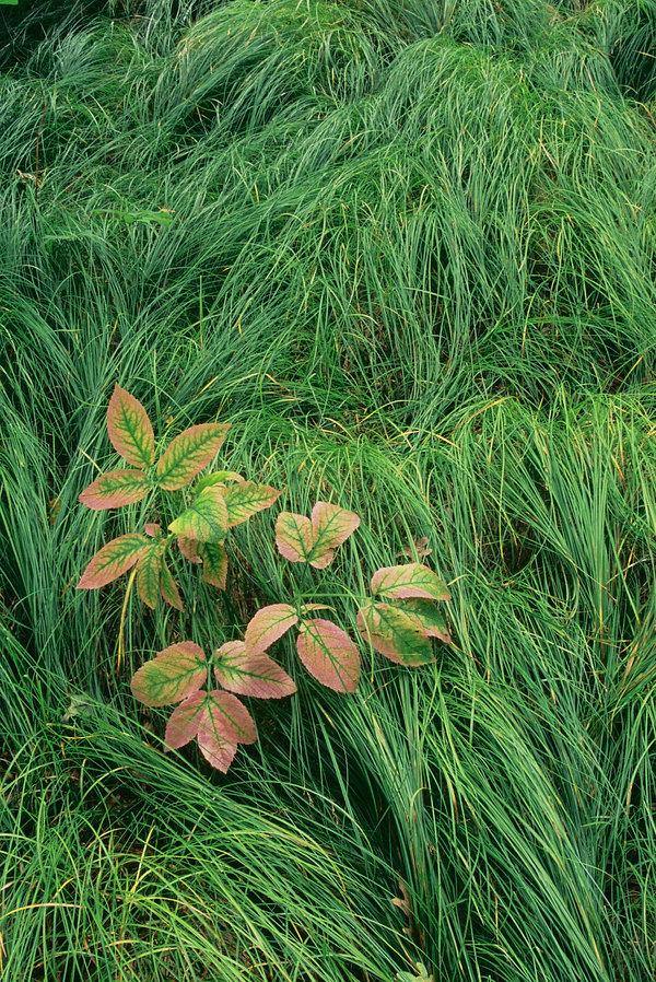 fotografie - Dekorace v trávě II