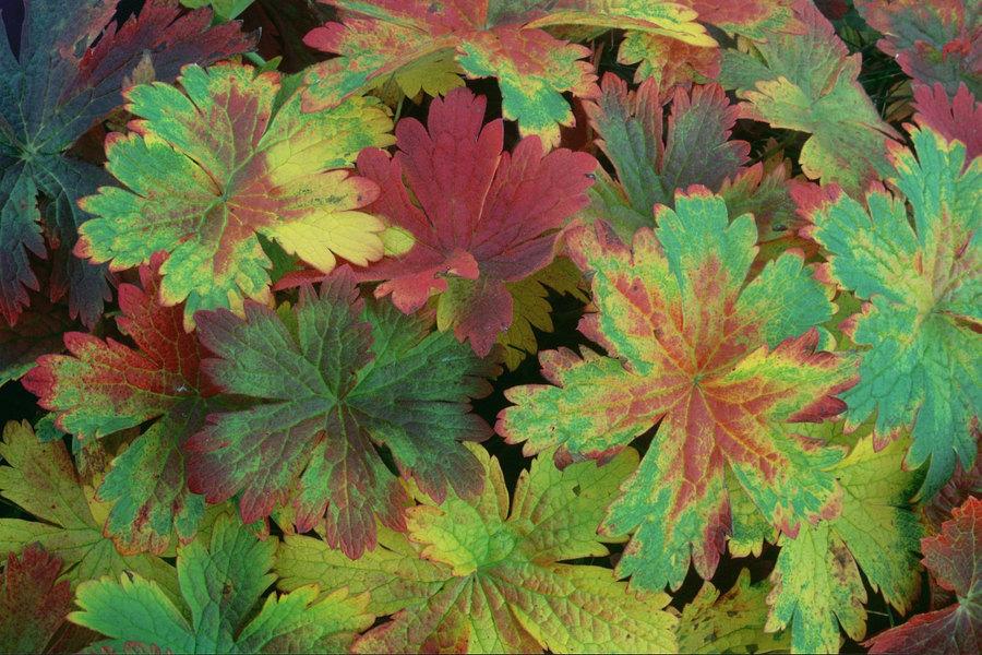 fotografie - Hýření podzimu