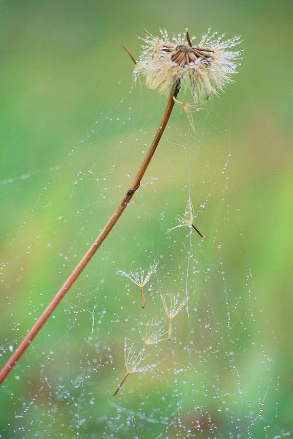 fotografie - Podzimní nevěsta