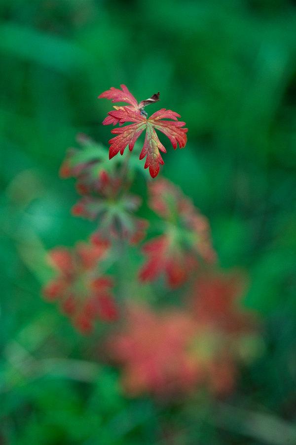 fotografie - Snový půvab podzimu