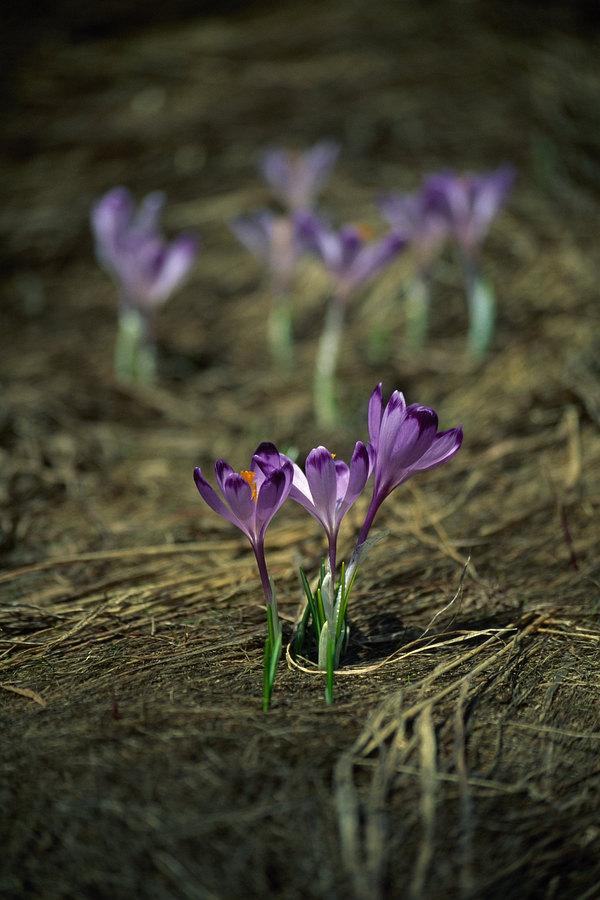 fotografie - Zrození horského jara