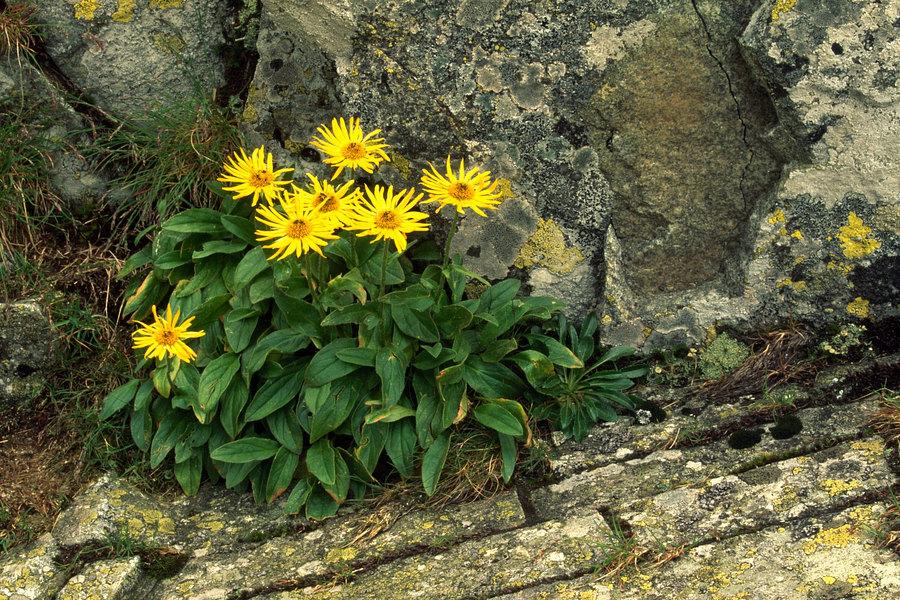 fotografie - Život očima květů hor I