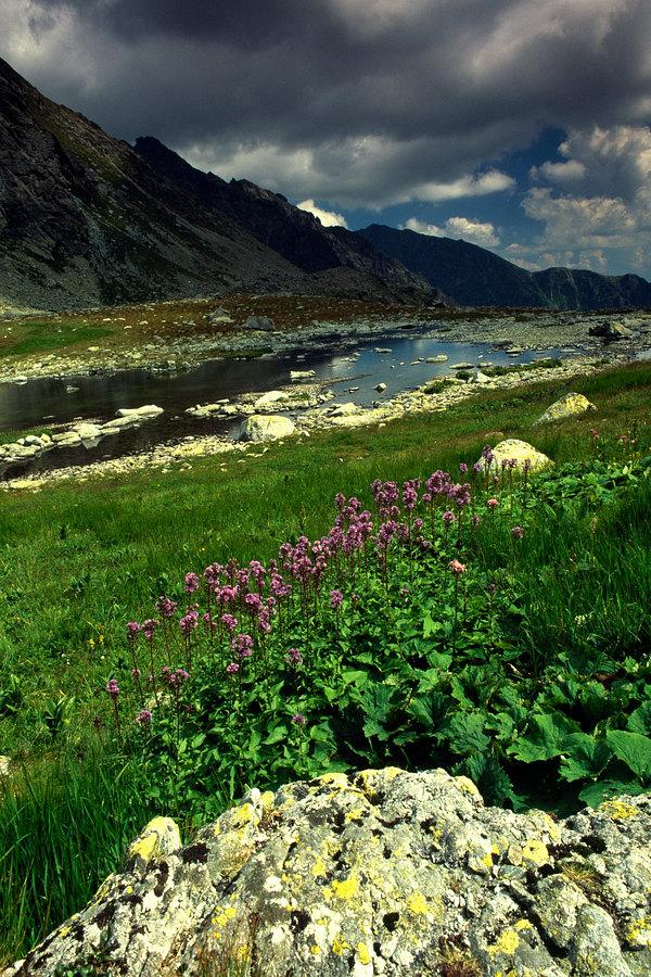 fotografie - Vábení horského léta