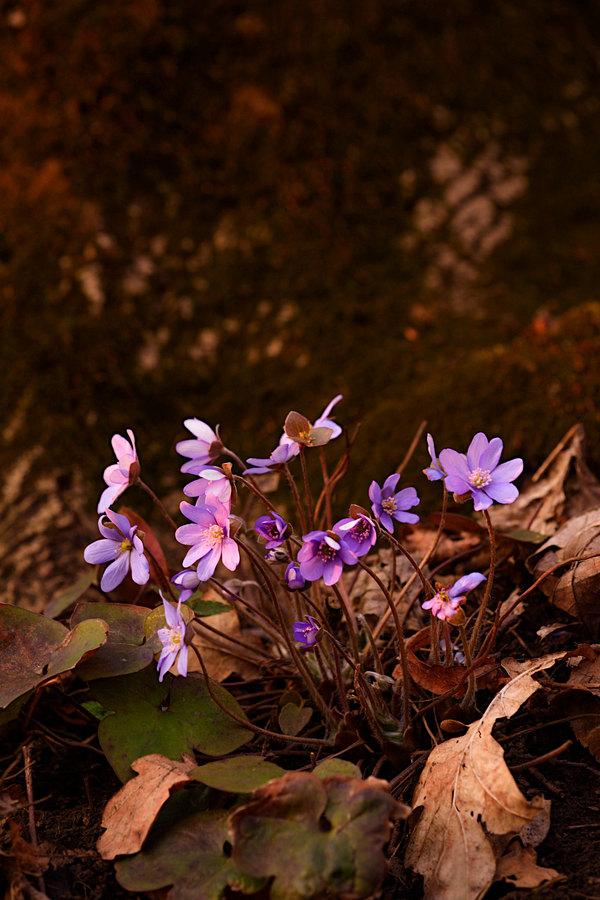 fotografie - Vzkříšení jara II