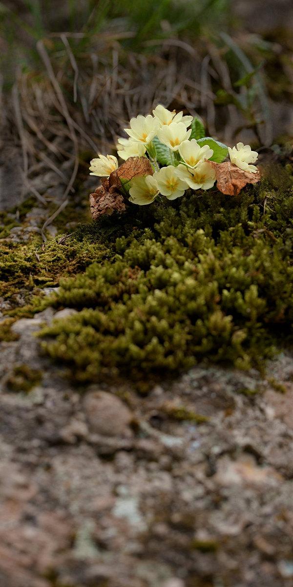 fotografie - Poezie skalní vertikály