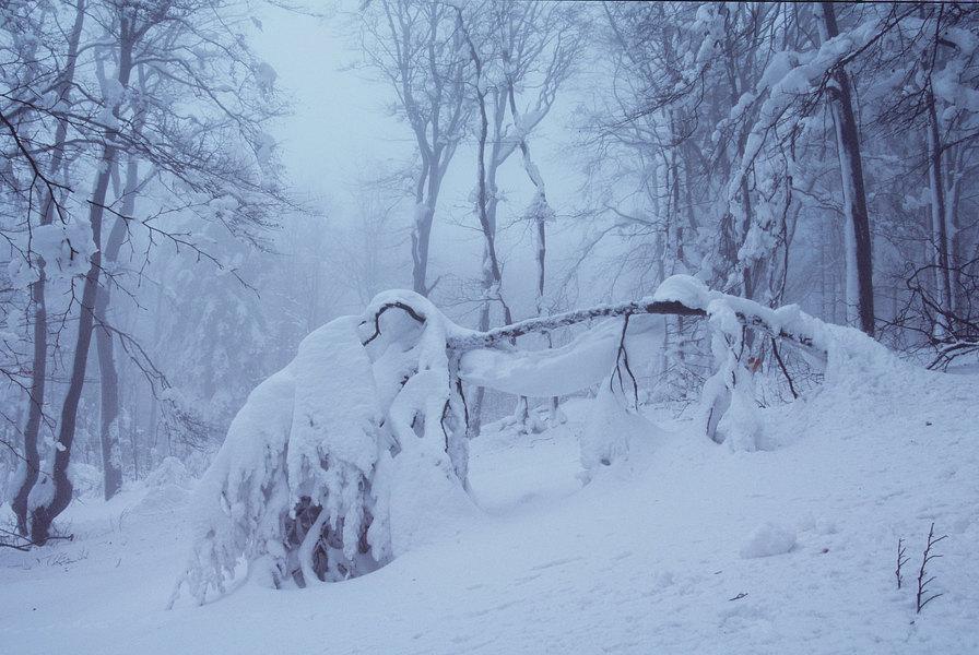 fotografie - Zimní spánek pralesa