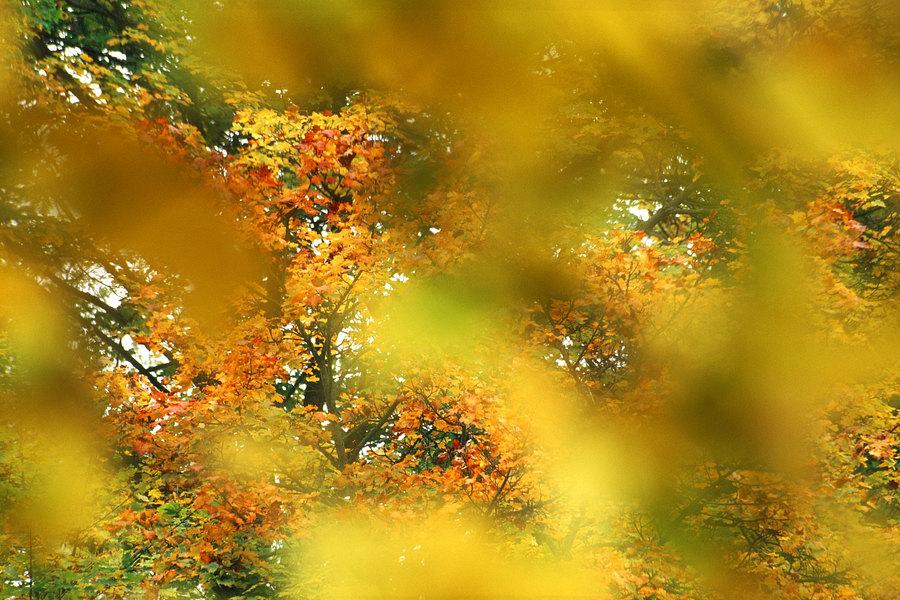 fotografie - Akvarelový podzim