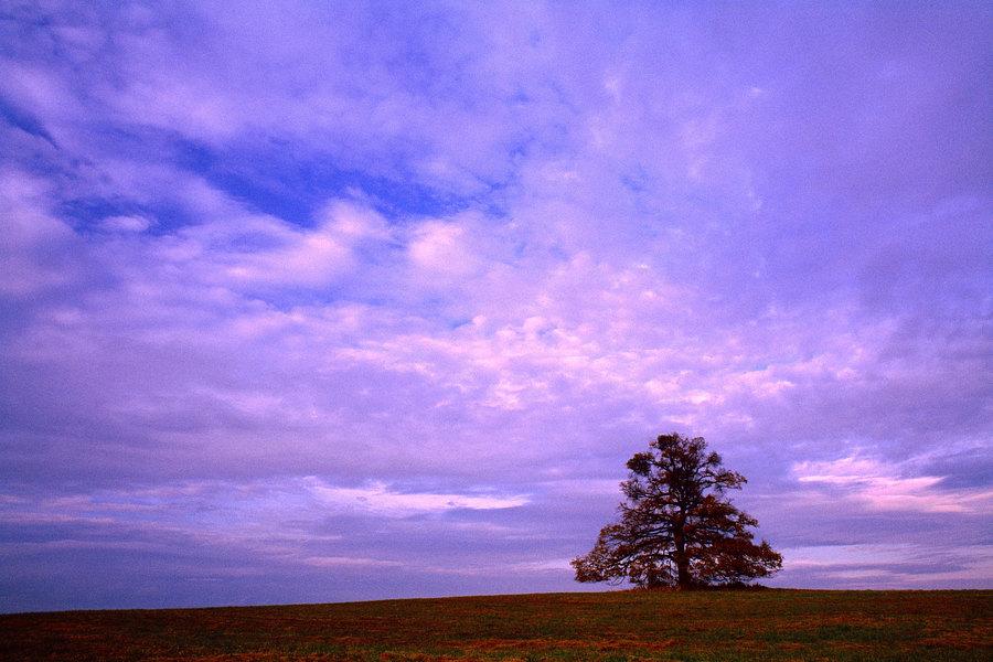 fotografie - Mezi nebem a zemí III