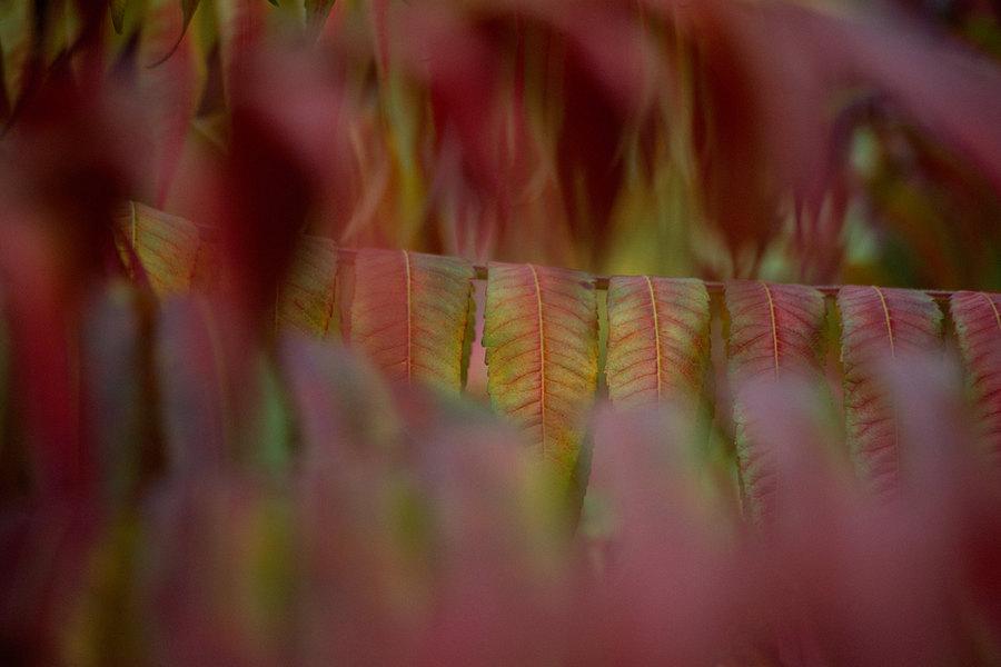 fotografie - Podzim posetý barvami I