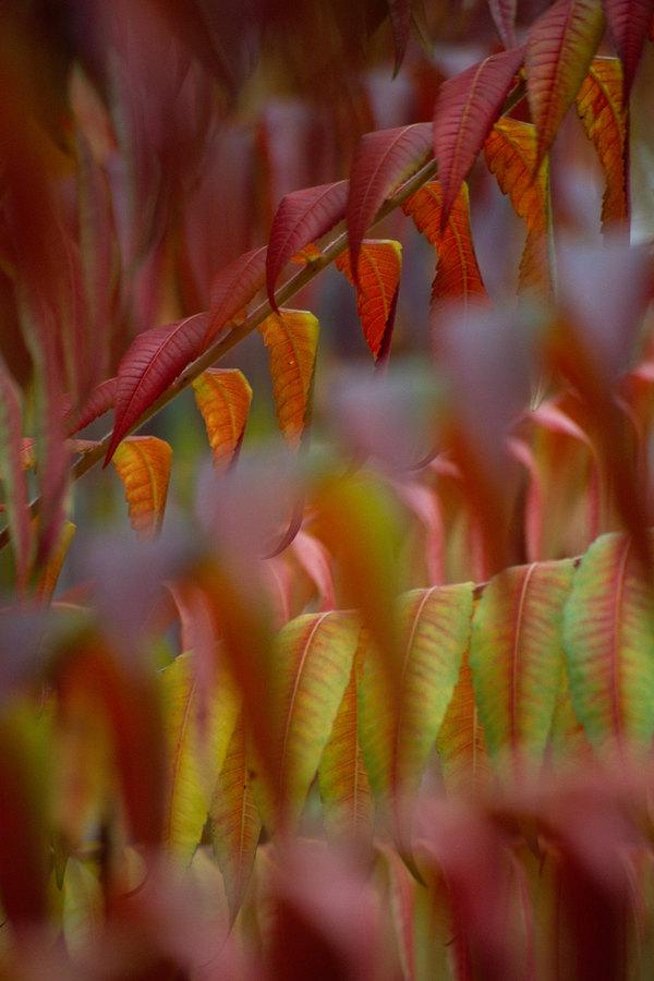 fotografie - Podzim posetý barvami II