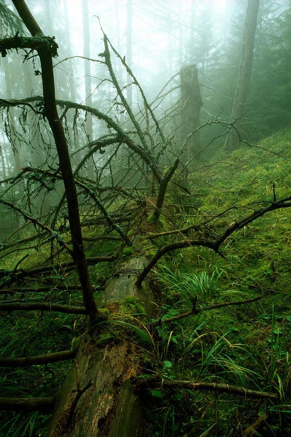 fotografie - V modřinovém pralese