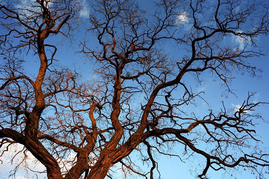 fotografie - Větvoví života