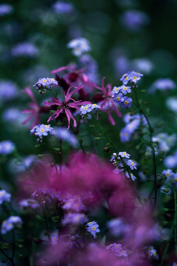 fotografie - Vzpomínky s luční vůní I