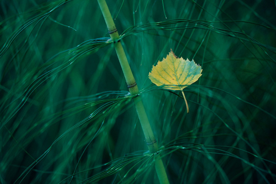 fotografie - Zasněný podzimní dialog II