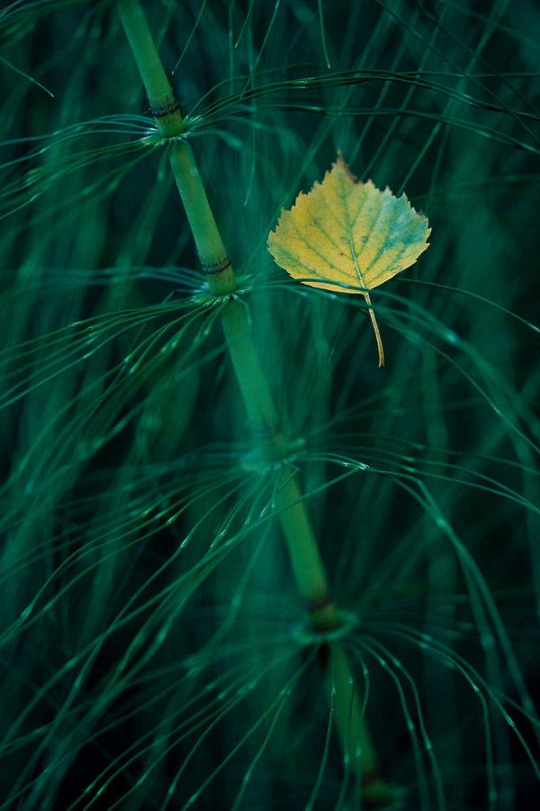 fotografie - Zasněný podzimní dialog III