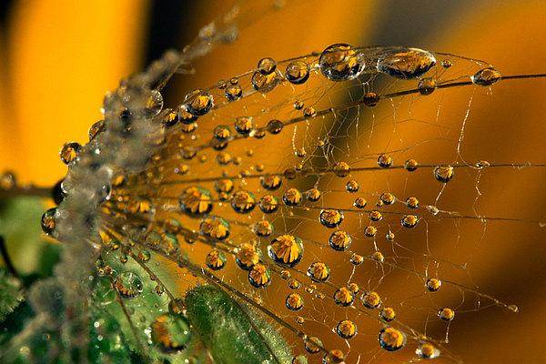 fotografie - Zahradní šperky VI