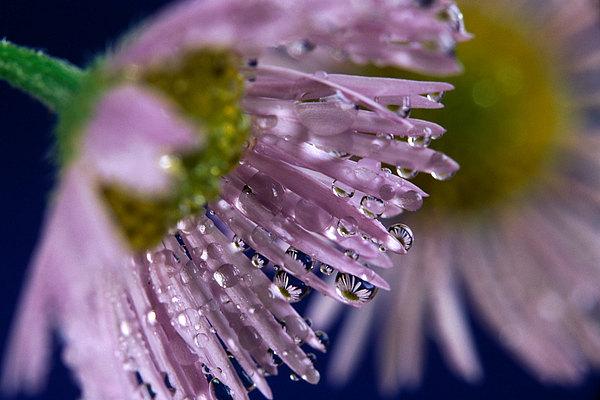 fotografie - Luční šperky VIII
