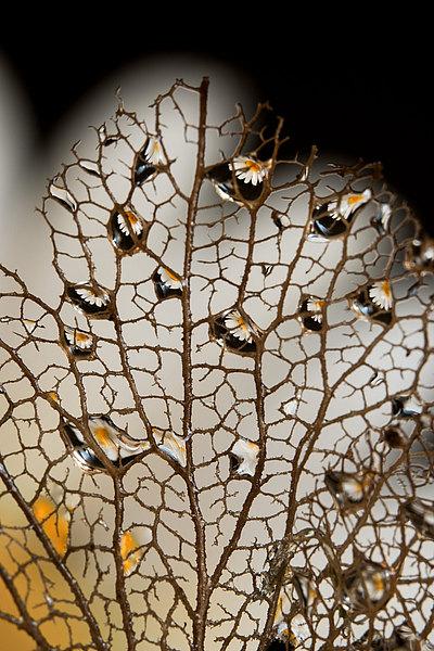 fotografie - Vyšperkované síťoví XIV
