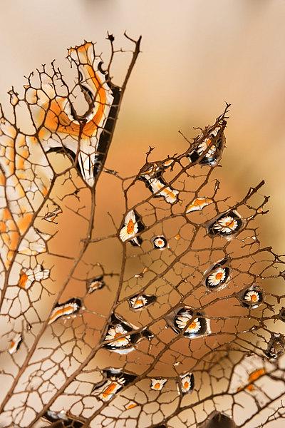 fotografie - Vyšperkované síťoví XVIII