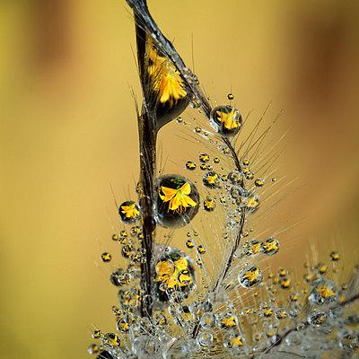 fotografie - Šperková liliová II