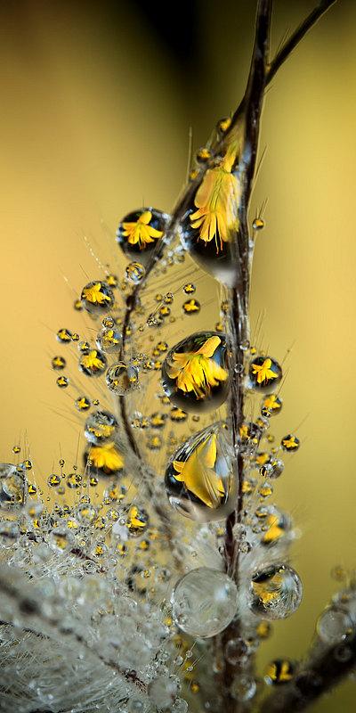 fotografie - Šperková liliová V
