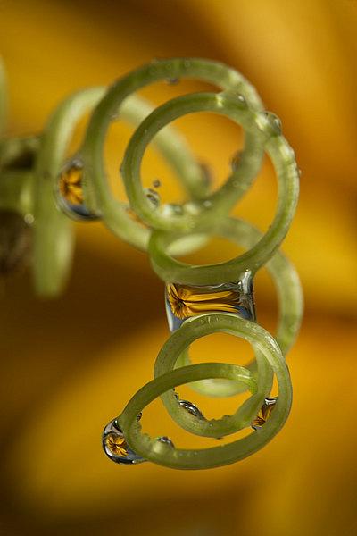 fotografie - Zahradní šperky XXX