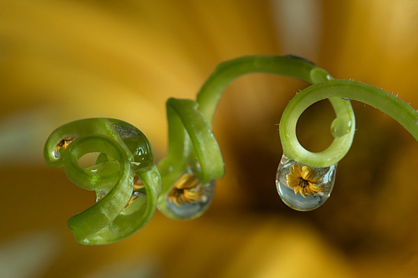 fotografie - Zahradní šperky XXV