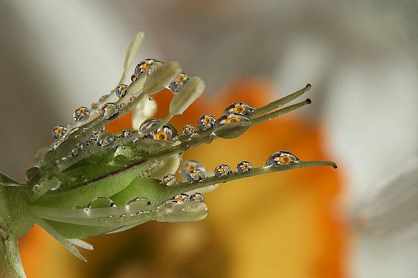 fotografie - Jarní šperky I