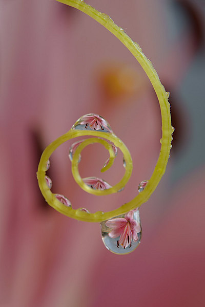 fotografie - Šperky v zahradě X
