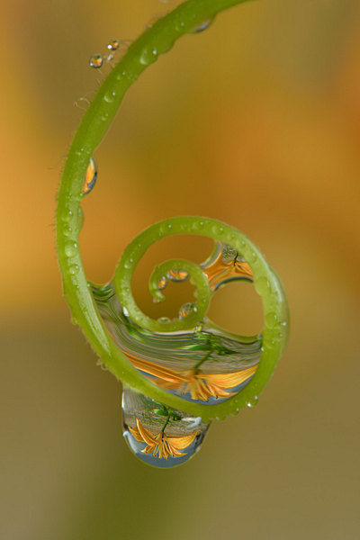 fotografie - Šperky v zahradě XIV