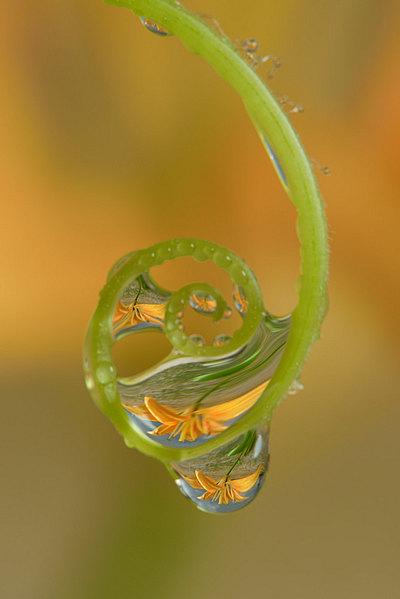 fotografie - Šperky v zahradě XV