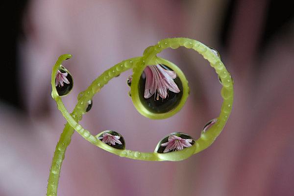 fotografie - Šperky v zahradě VIII