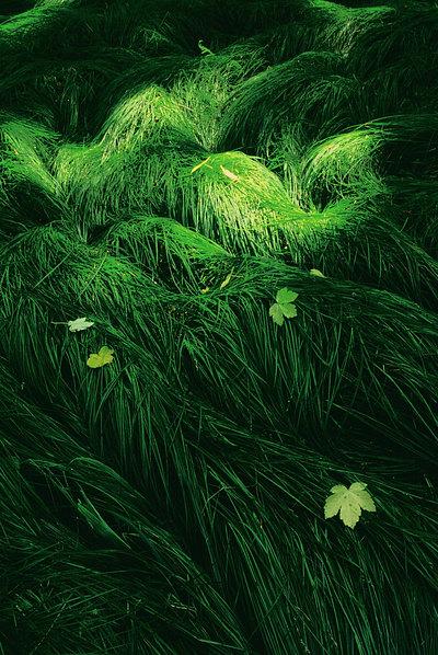 fotografie - Světlo lesa