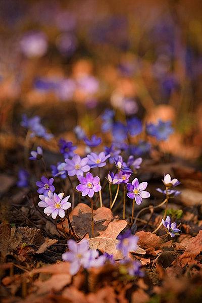 fotografie - Vzkříšení jara I