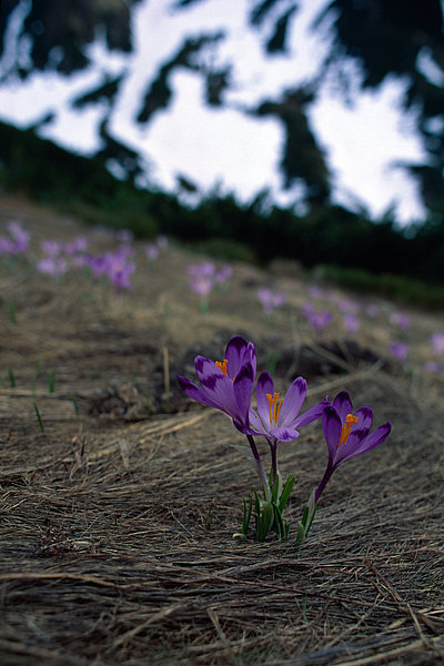 fotografie - Dekor jarních dolin