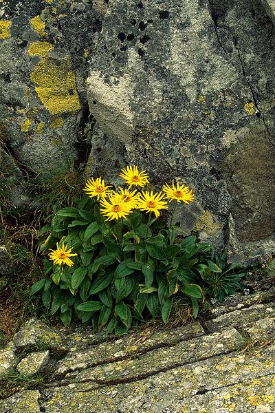 fotografie - Život očima květů hor II