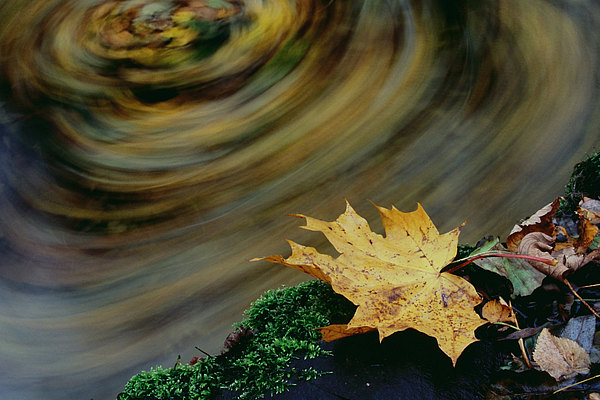 fotografie - Podzimní zamyšlení I