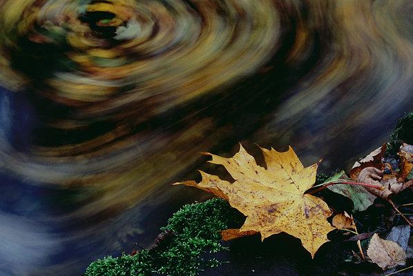 fotografie - Podzimní zamyšlení II